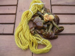 Skein dyed using mushrooms from our lawn