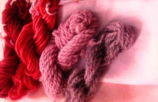 rhubarb, madder, lac etc 012