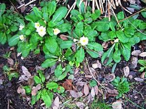 Feb flowers 006