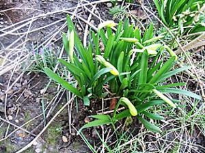 Feb flowers 010