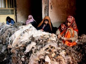 afghan cashmere sorting in Herat