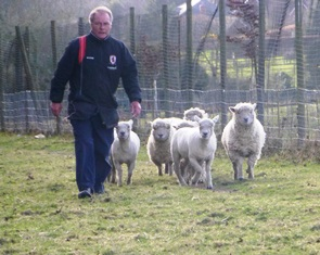 Graham herds his sheep
