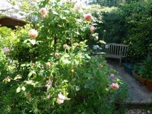 blog garden 1