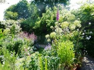 blog garden 3