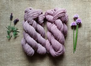 alkanet lavender 20160612_175340